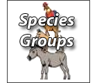 Search Species Groups