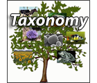 Search Taxonomy